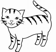 Gambar Kucing Tanpa Warna Gambar Kucing Lucu Sketsa