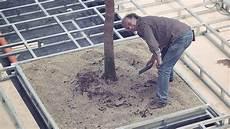 Gro 223 En Baum Im Innenraum Pflanzen Innenraumbegr 252 Nung Planen