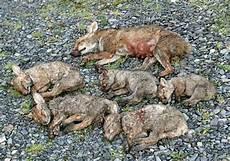 une martre peut tuer un chat de 200 renards en limousin collectif limousin d