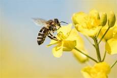 Biene Malvorlagen Xing Baden W 252 Rttemberg Neues Volksbegehren Zum Artenschutz