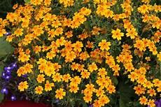 Essbare Bl 252 Ten Welche Blumen Kann Essen Und Wann