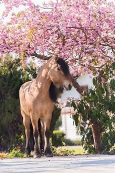 kirschbl 252 tenshooting pferdefotografie m 252 nchen