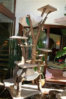 1000 images about kratzb 228 ume on cat trees