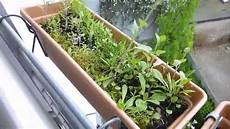 Pflanzen Update 16 Schimmel In Der Erde Und