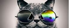 15 Cool Cats On