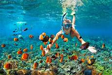 best snorkeling hawaii skyline eco adventures
