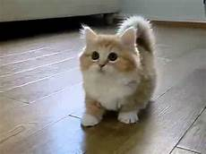 Legged Cat