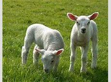 Zoogdieren / Dierenplaatjes   Dierenenoerdieren.jouwweb.nl