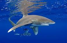 Berbagai Macam Gambar Ikan Air Laut Dan Air Tawar