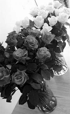 photo romantique noir et blanc images gratuites fleur noir et blanc la photographie