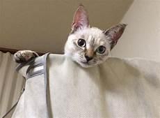 Kucing Jalanan Memilih Sendiri Ownernya Di Taman Kota