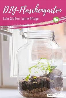 ewiger minigarten im glas so gelingt das biotop f 252 r den
