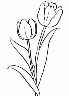 Malvorlagen Kostenlos Tulpen Ausmalbilder Ausmalbilder Tulpen Zum Ausdrucken