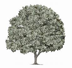 royalty free money tree pictures images and stock photos
