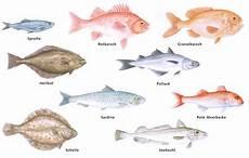 fischarten liste mit bildern stand der weltfischerei 171 world review