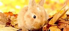 Wie Alt Werden Kaninchen