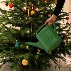 weihnachtsbaum im netz lassen tipps damit der weihnachtsbaum l 228 nger frisch bleibt