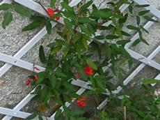 autres plantes grimpantes interessantes