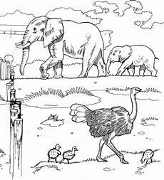 Malvorlagen Afrikanische Tiere Free Elephant Coloring Pages