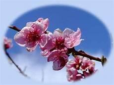 fiori di rosa fiori di pesco fiore di pesco creativit 224 e pasqua fioreria sarmeola