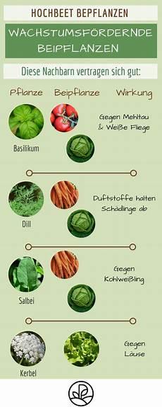 Welche Kräuter Vertragen Sich - hochbeet fruchtfolge sch 228 dlingsvertreibende pflanzen