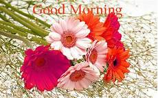 flower images hd morning 157 morning flowers images photos pics hd