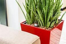 erde oder hydrokultur seerosen pflanzen ohne erde seerosen im gartenteich