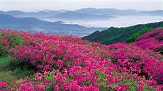 flower valley hd wallpaper the of flower fields in hd photos field wallpaper