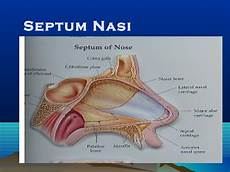 Anatomi Fisiologi Telinga Hidung Tenggorokan