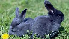 kaninchen kaufen was muss beachten