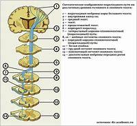 повреждения головного мозга после наркотиков