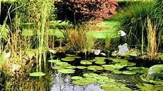 Algen Im Gartenteich - was hilft gegen algen im gartenteich ndr de ratgeber