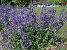 Perennials Burst Bright With Color In Summer Realty Times