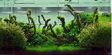 amano aquascape basic forms aqua rebell