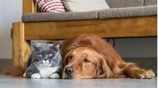 hund in wohnung katzen und hunde gemeinsam halten so gelingt es