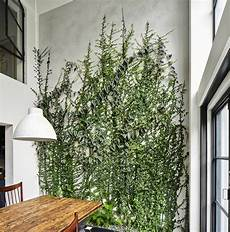 Climbing Plants On Walls