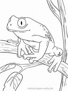 Frosch Malvorlagen Tiere Malvorlage Frosch Ausmalbilder Ausmalbild Frosch Und