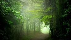 Gambar Wallpaper Pemandangan Hutan Gudang Wallpaper