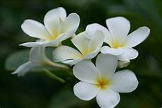 White Flowers Hd Images by White Flowers Names And Images 12 Free Hd Wallpaper