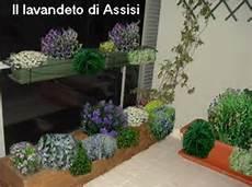 piante fiorite da terrazzo progetti giardini gratis progetti giardini privati