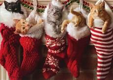 kittens in christmas box of 10 avanti cat christmas cards ebay