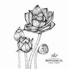 disegni fiore di loto lotus flower drawings vector premium