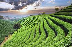 9 exles of terrace farming around the world mnn mother nature network