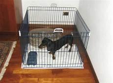 recinto per cani in casa recinto per cani da interno o box da esterno guida all