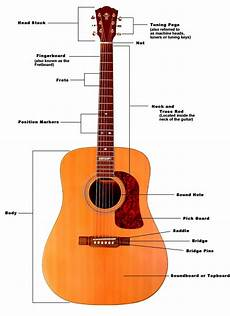 Names Of The Parts Of The Acoustic Guitar Guitar