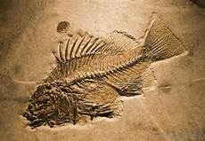 what is a fossil and how is it formed what is permineralization with pictures