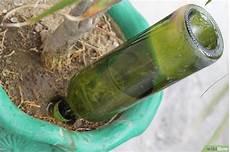 Le Aus Weinflasche - eine bew 228 sserung f 252 r pflanzen aus einer weinflasche machen