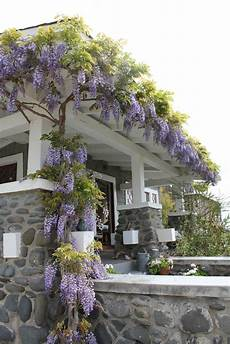 Climbing Plants For Front Of House