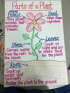 plants lesson ks1 13726 17 creative ways to teach plant cycle weareteachers