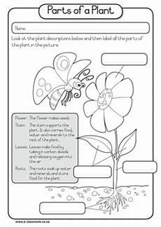 parts of plants kindergarten worksheets 13581 kindergarten science learning outcomes march 2013
